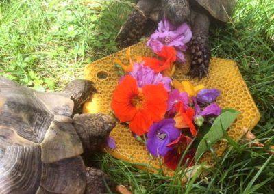 My tortoises